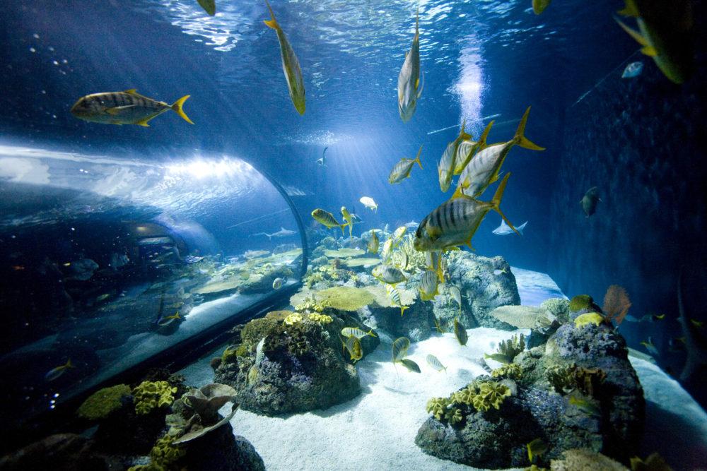 This Chicago Aquarium Saved Millions