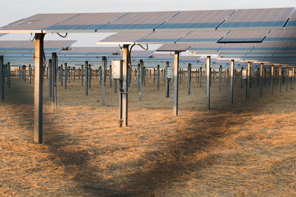 a field of solar panels