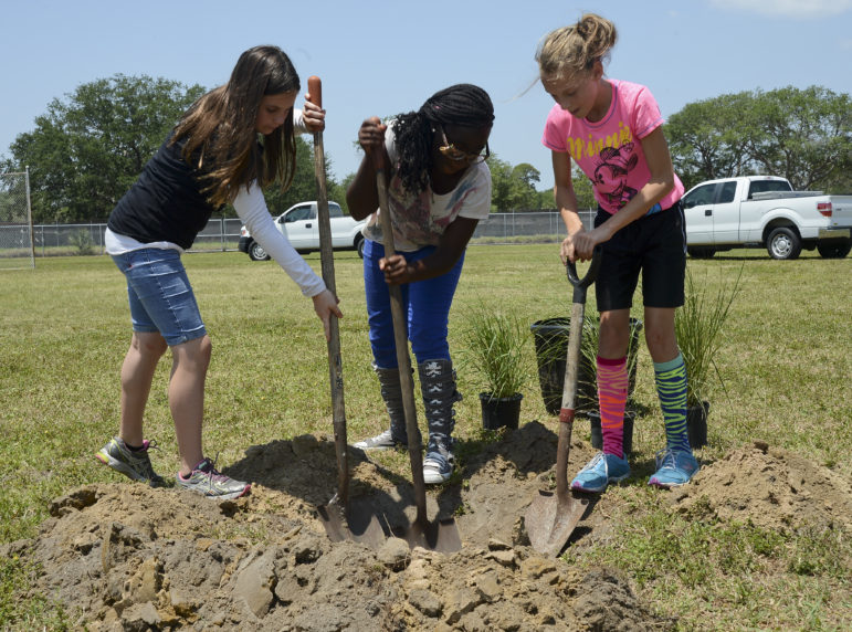 a trio of young girls shovel dirt while planting trees